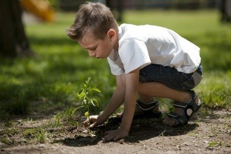 get children plant a tree
